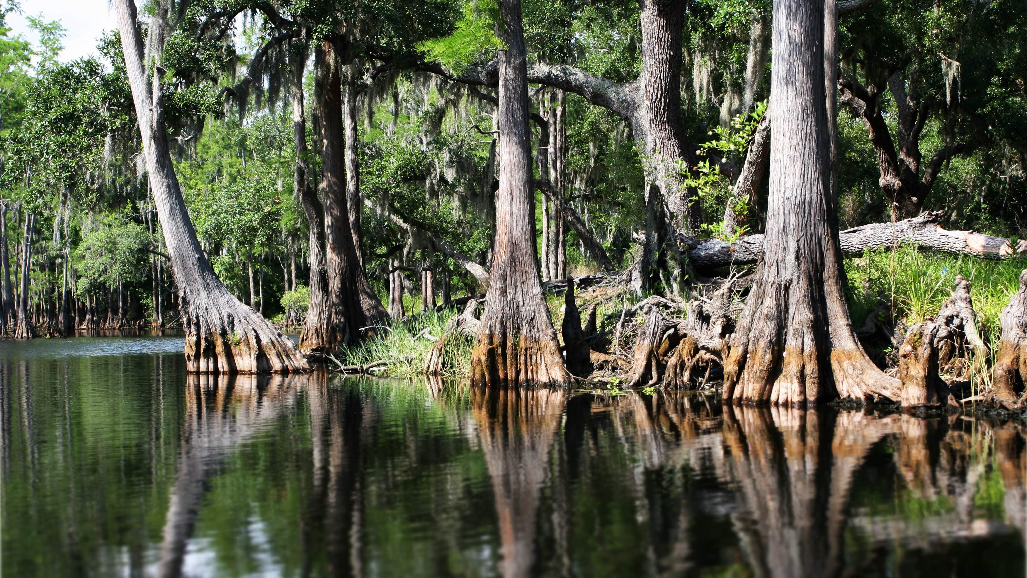 Everglades mangroven-landschap