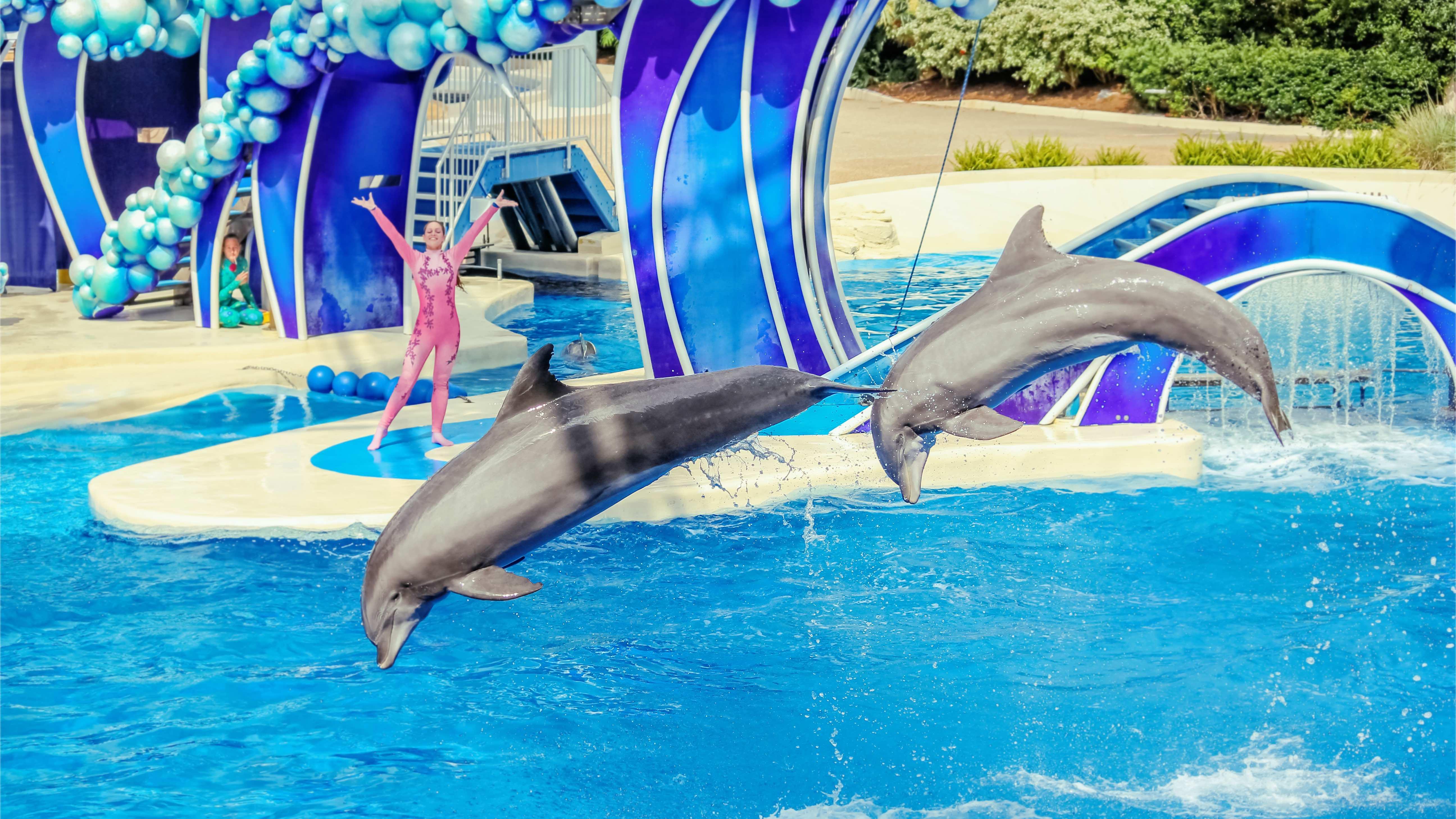 Dolfijnshow in SeaWorld