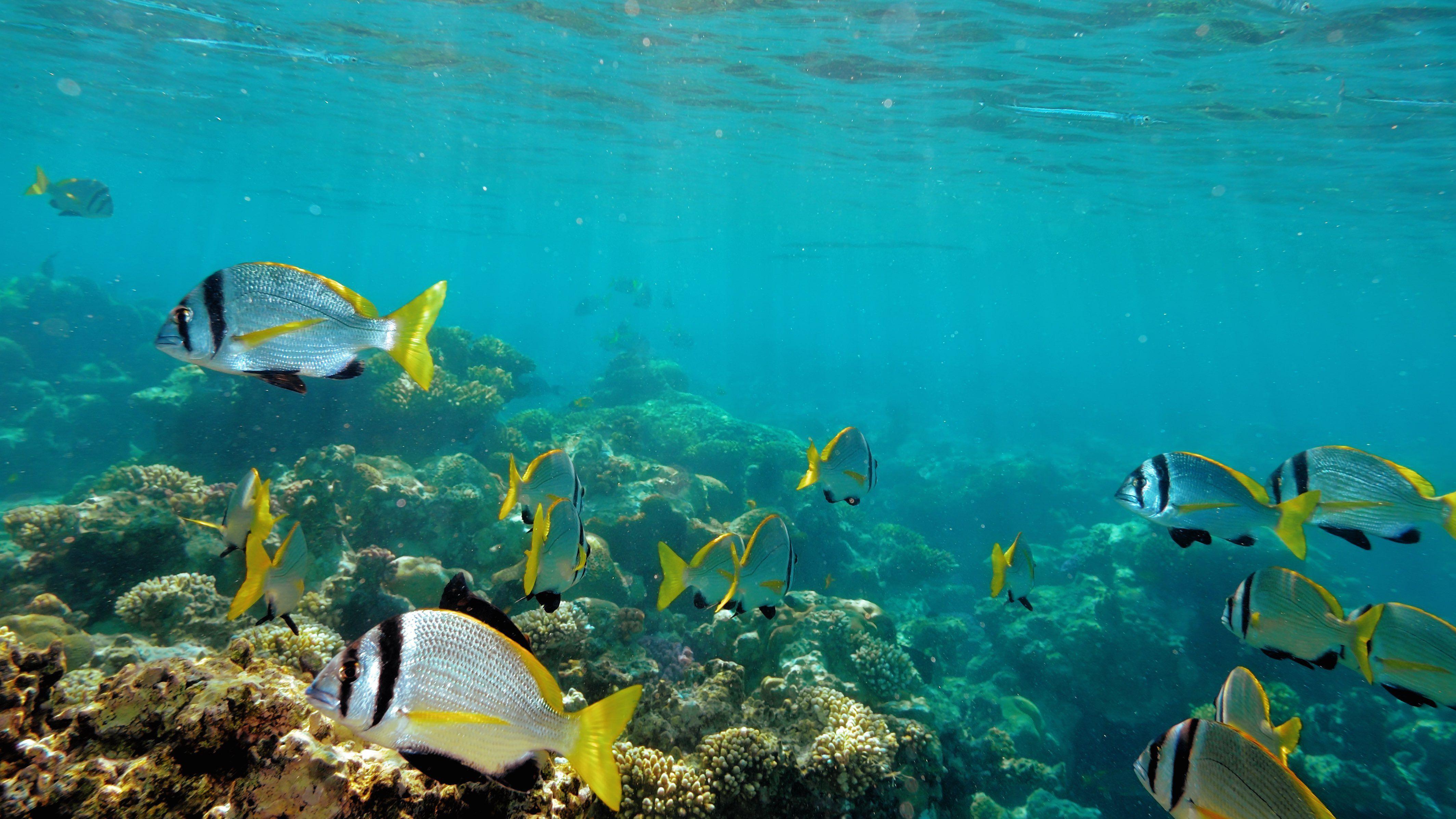 Snorkelen in Key West